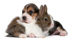 Dog-and-rabbit grooming | Furball Mobile Pet Grooming Singapore